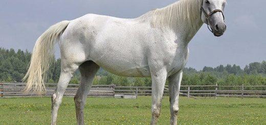 К чему снится лошадь женщине по сонникам Миллера, цыганскому