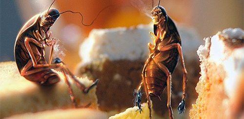 К чему снятся тараканы по сонникам Ванги и Миллера