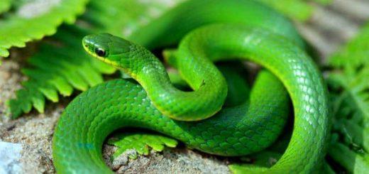 К чему снится змея (змеи) по сонникам: Ванги, Фрейда и др.
