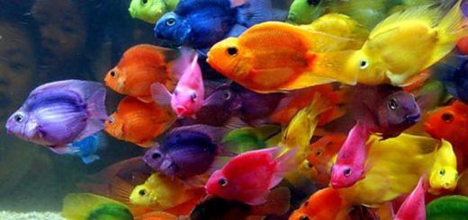 К чему снятся рыбки по сонникам и толкованиям основных значений