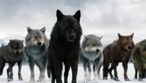 К чему снится волк по сонникам Фрейда, Миллера, Ванги, Лоффа, Цветкова