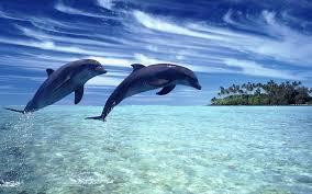 К чему снятся дельфины по сонникам Миллера, Фрейда, Ванги