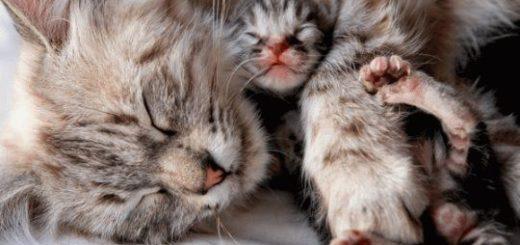К чему снится что кошка родила котят?