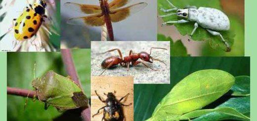 К чему снятся насекомые, значения по основным сонникам