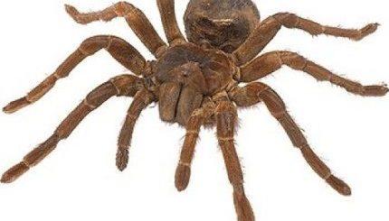 Примета увидеть паука - как понять к чему появился