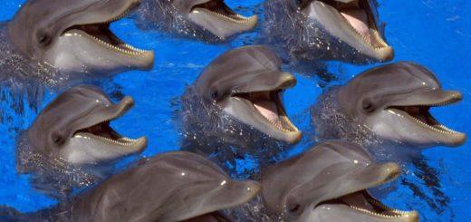 К чему снятся дельфины по сонникам: Миллера, Ванги и др.