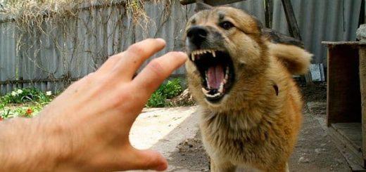 К чему снится нападение собаки по сонникам Ванги, Хассе