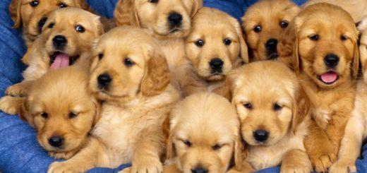 К чему снится много собак по сонникам Фрейда и Миллера