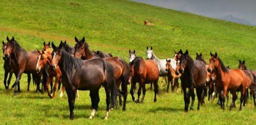К чему снится табун лошадей по различным сонникам