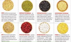 Блюда из бобов: лучшие рецепты