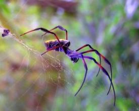 Приметы и суеверия о пауках