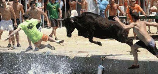 К чему снится бык с рогами, который нападает на вас?