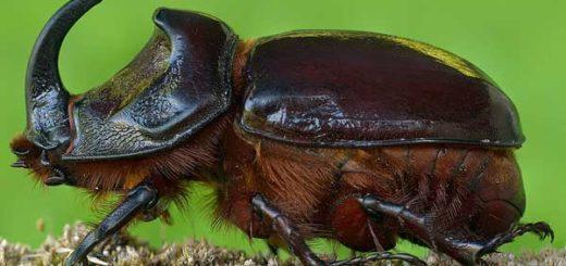 К чему снится жук толкования сонников с пояснениями значений