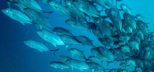 К чему снится много рыбы по сонникам Фрейда и Миллера