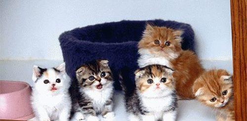 К чему снится много маленьких котят?