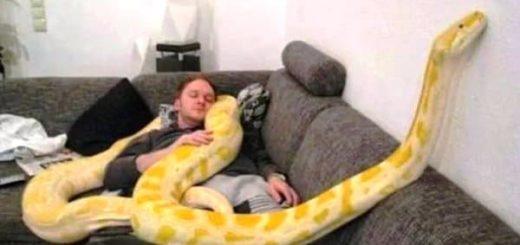 К чему снится змея в вашем доме по сонникам Миллера, колдуньи Медеи