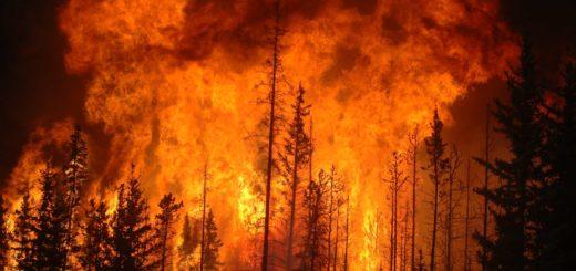 К чему снится пожар по сонникам: Миллера, Ванги, Нострадамуса