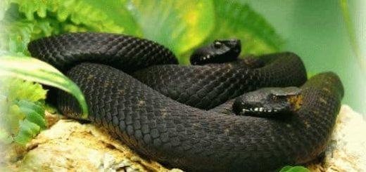 К чему снится много змей женщине