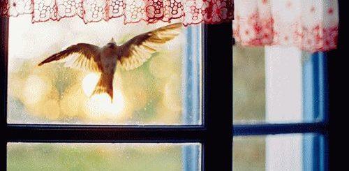 Примета: птица ударилась в окно и улетела