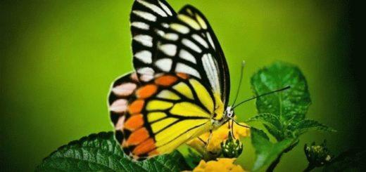Примета: бабочка залетела в дом