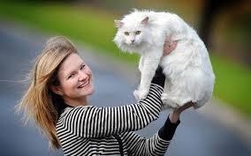 К чему снится белый кот по сонникам Фрейда, Миллера, Лоффа, Цветкова