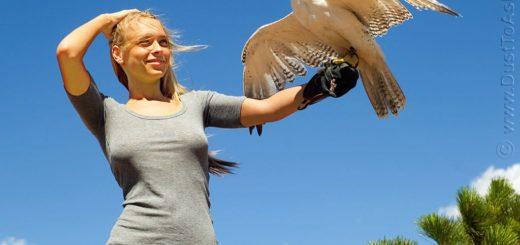 К чему снится птица в руках по сонникам и основным толкованиям сновидения