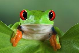 Приметы о лягушках