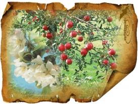 Яблоко: значение символа