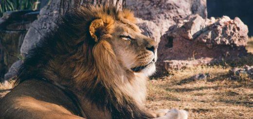 Совместимость Льва с другими знаками зодика