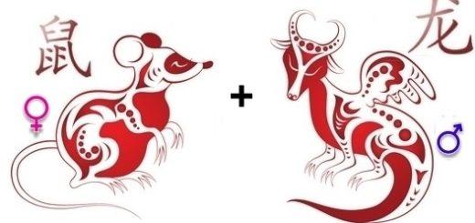 Совместимость Дракона иКрысы