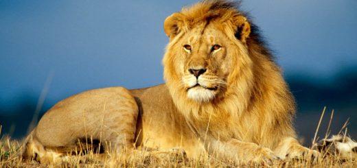 Совместимость Львов