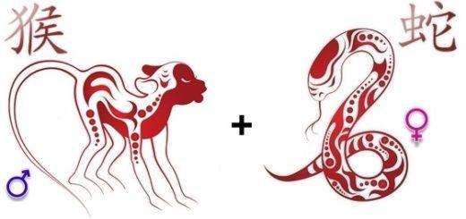 Совместимость Обезьяны и Змеи