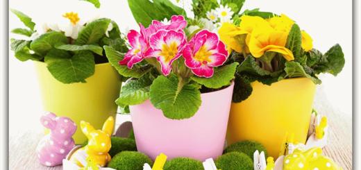 Цветы в горшках по соннику - к чему они снятся?