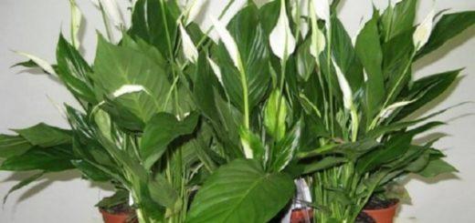 Говорят, чтобы в доме было счастье, нужно завести эти растения...