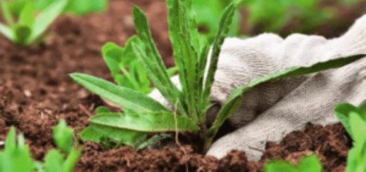 Работающий способ, как избавиться от сорняков и травы навсегда. Легко и надолго!