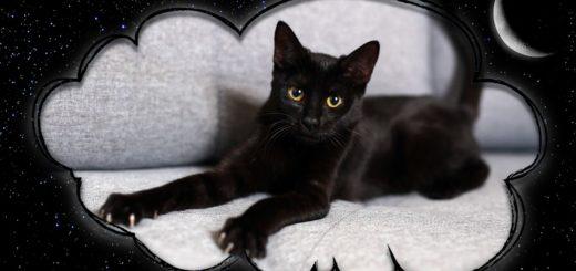 К чему снится чёрный котёнок - сонник