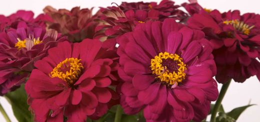 К чему снятся цветы - узнать значение сна