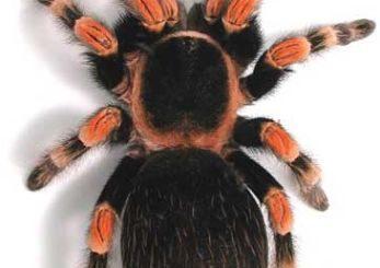К чему снится много пауков - толкование по сонникам