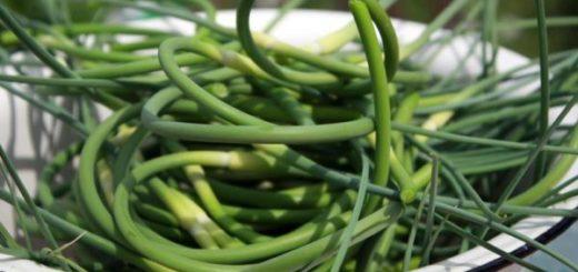 Стрелки чеснока — содержат огромное количество витаминов, оздоравливают, замечательная приправа